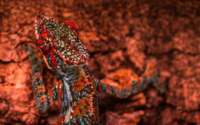 Een kameleon met jouw kleuren